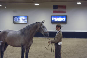 Lusitano Classes