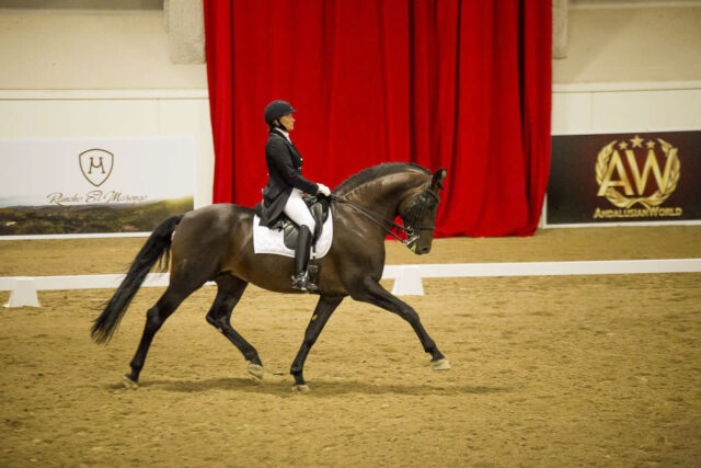 Dressage at AWC