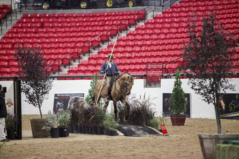 AWC Working Equitation