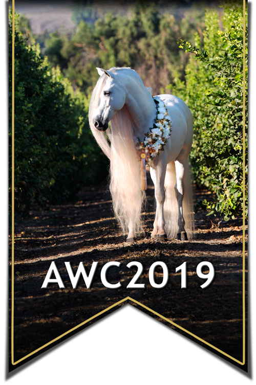 Andalusian World Cup 2019